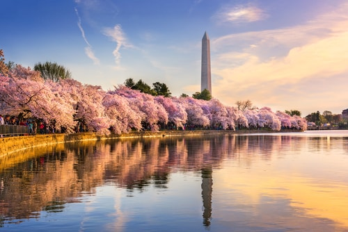 lincoln-memorial-washington-cherry-blossoms