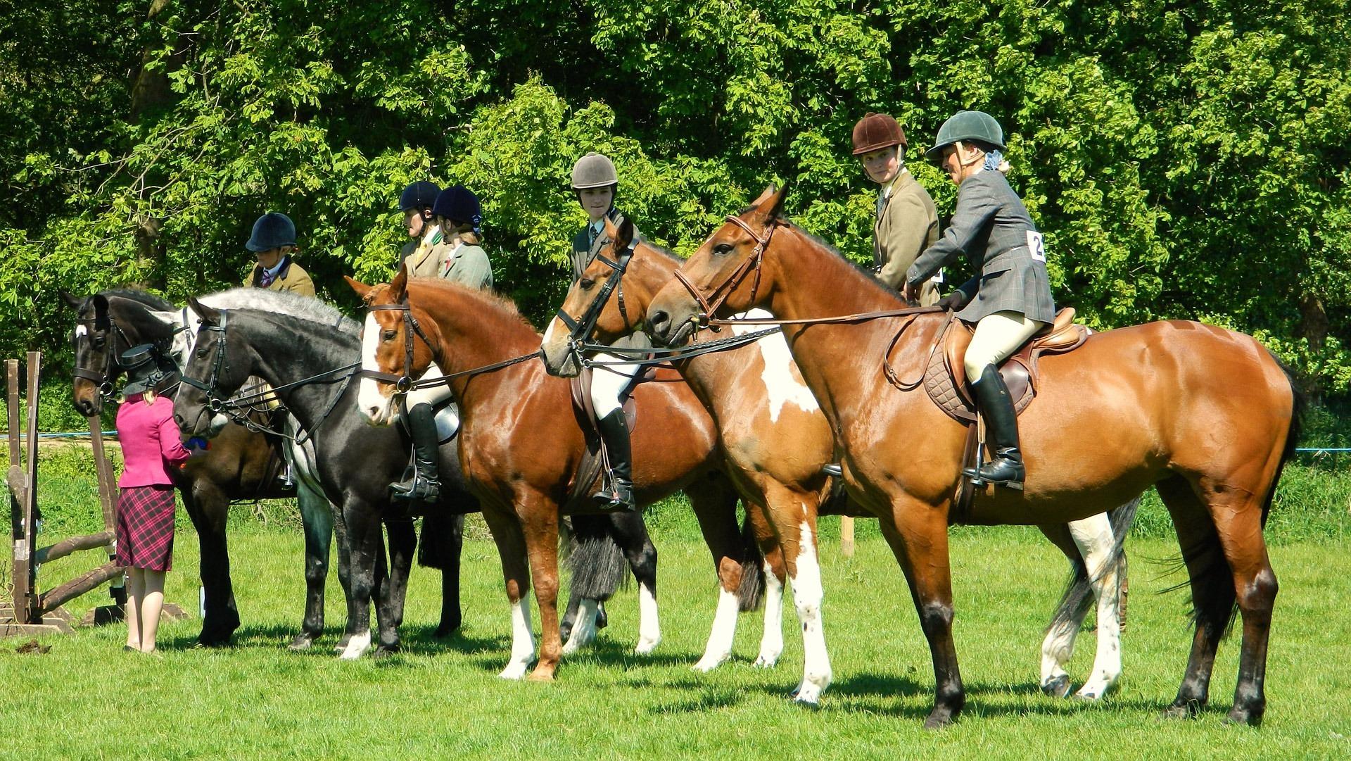 Horse, rider, show