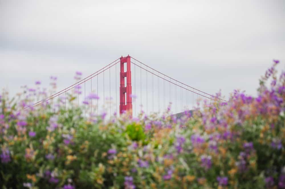 golden-gate-bridge-behind-flowers