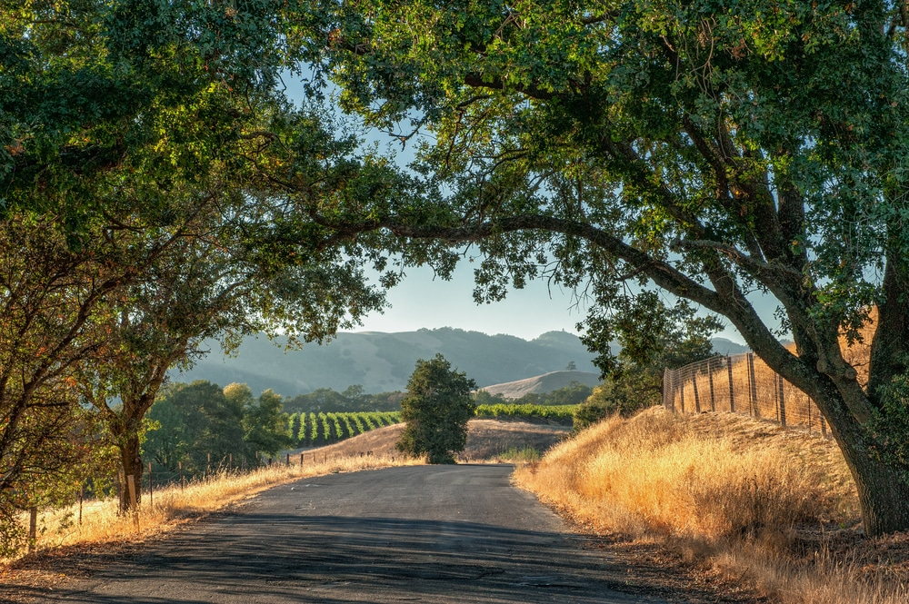 road-to-sonoma-with-trees