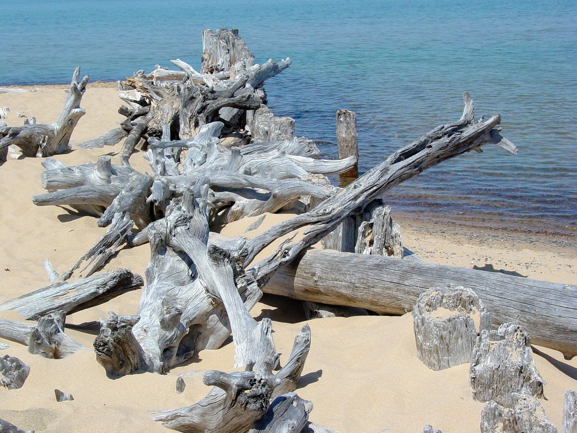 Driftwood, lake superior, beach