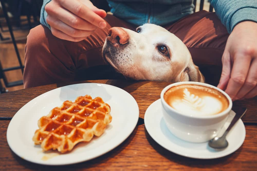 dog-at-cafe-with-owner