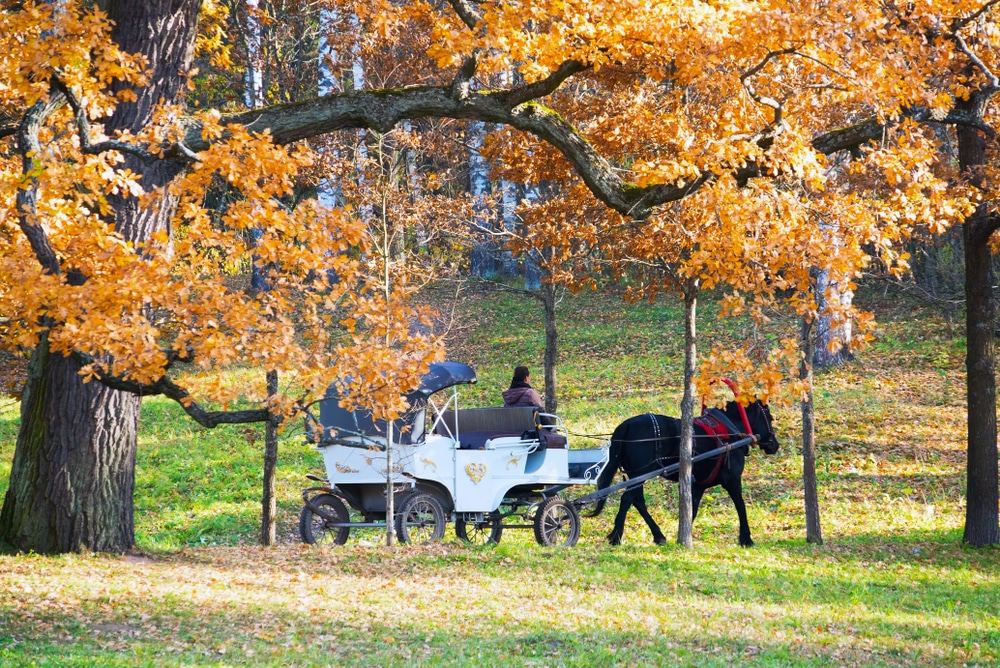horse-drawn-carriage-under-trees