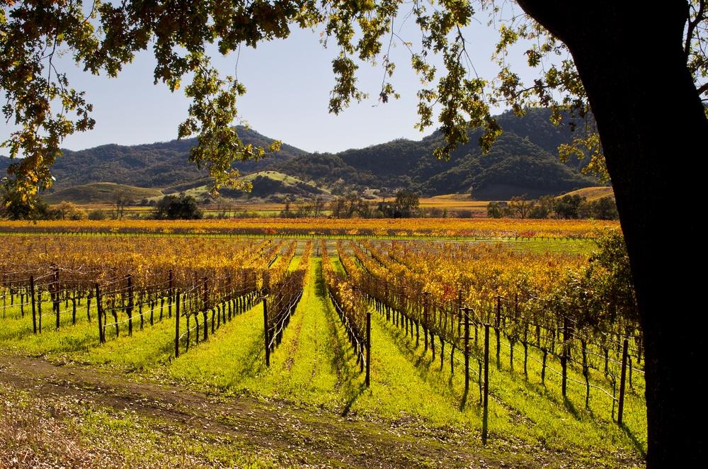 napa-valley-vineyards-in-autumn