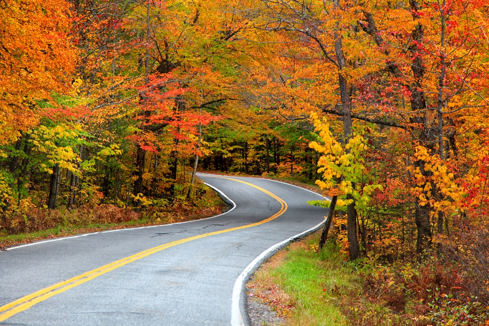 orange-leaves-above-road