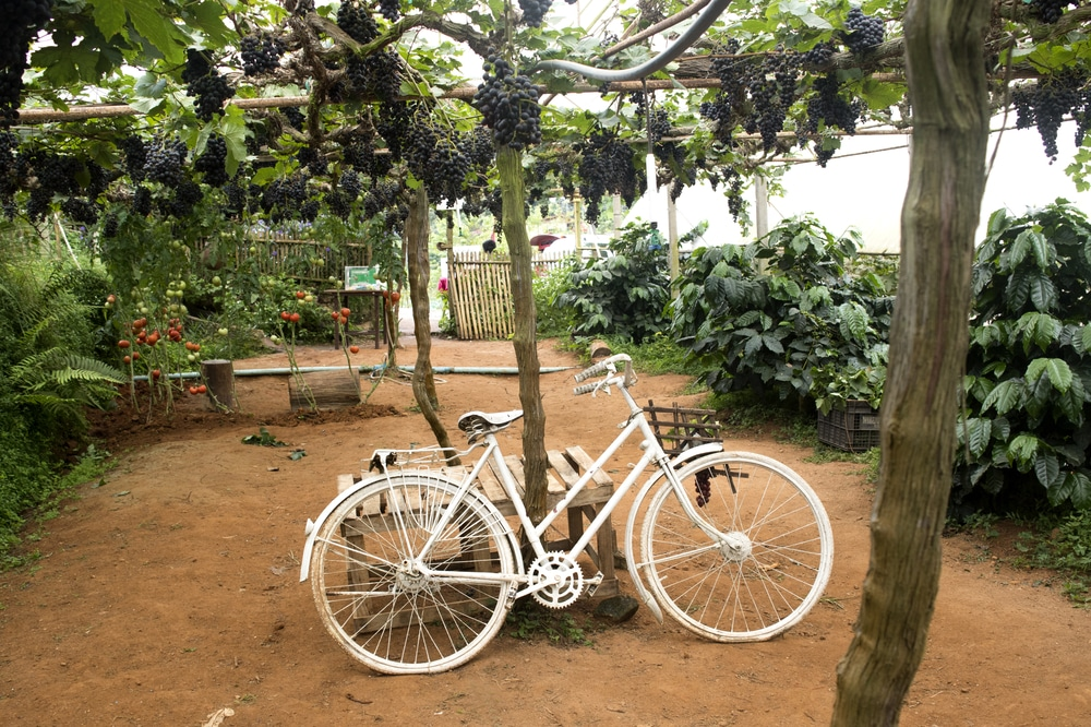 bike-in-vineyard