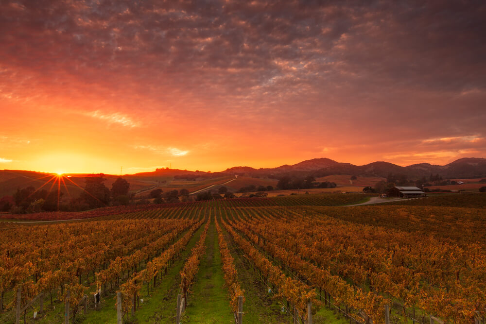napa-valley-autumn