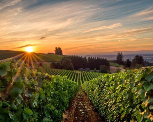 wiliamette-valley-wine-country-in-oregon