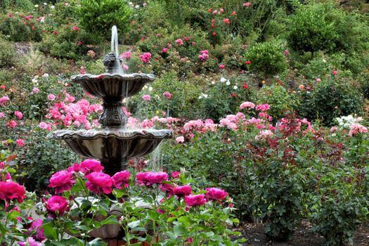 rose-garden-portland-spring