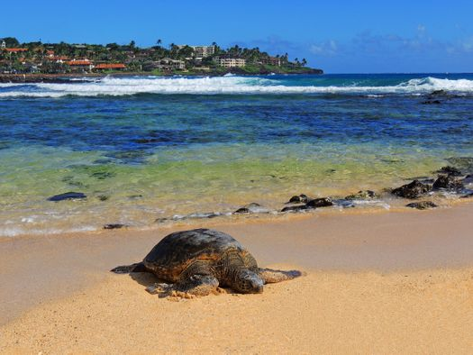 How to Find the Best Locations for Investment in Hawaii Vacation Rentals